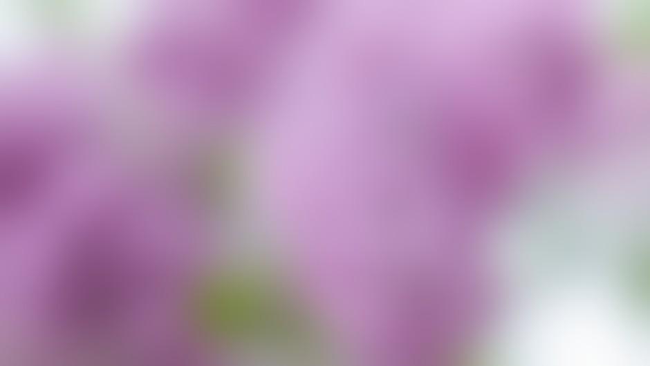 Leva nosnica sprejema negativne, desna pozitivne vonje.