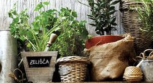 Strokovni nasveti za gojenje zelišč na balkonu, terasi ali okenski polici