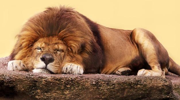 Sedem smrtnih grehov: Lenoba (foto: Shutterstock)