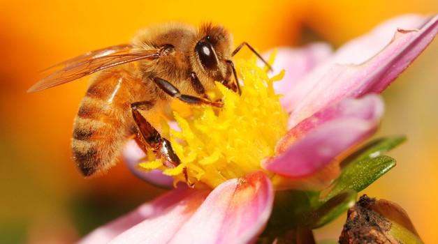 Najboljši naravni zavezniki za nego ustnic (foto: Shutterstock)