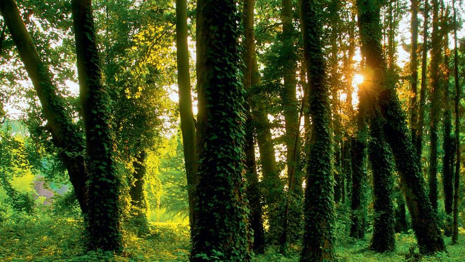 Če si predstavljate, da ste drevo, katero drevo ste? (foto: Shutterstock, Mare Milin)