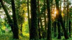 Če si predstavljate, da ste drevo, katero drevo ste?