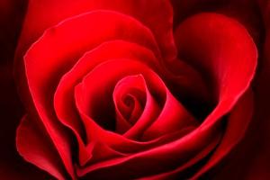 vrtnica-srce