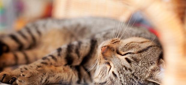 Mačka je velika učiteljica užitka, hkrati pa neprestane opreznosti.