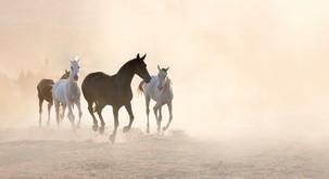 Uvertura v poletje s Shamballo v idilični naravi v družbi konj