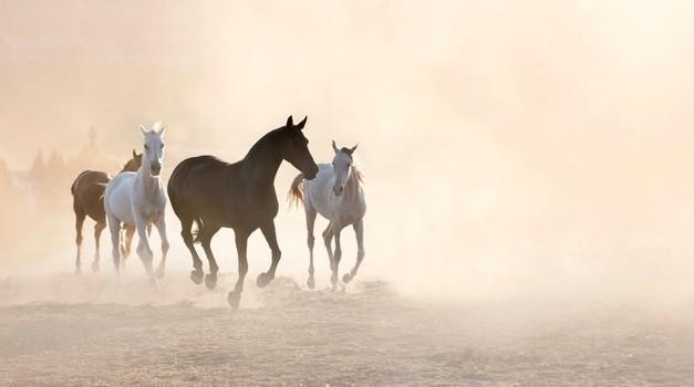 Uvertura v poletje s Shamballo v idilični naravi v družbi konj (foto: profimedia)