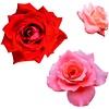 Vrtnica - duhovni simbol