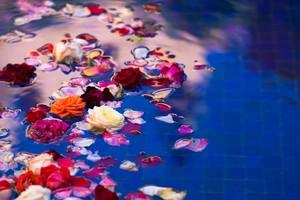 roze-vrtnice