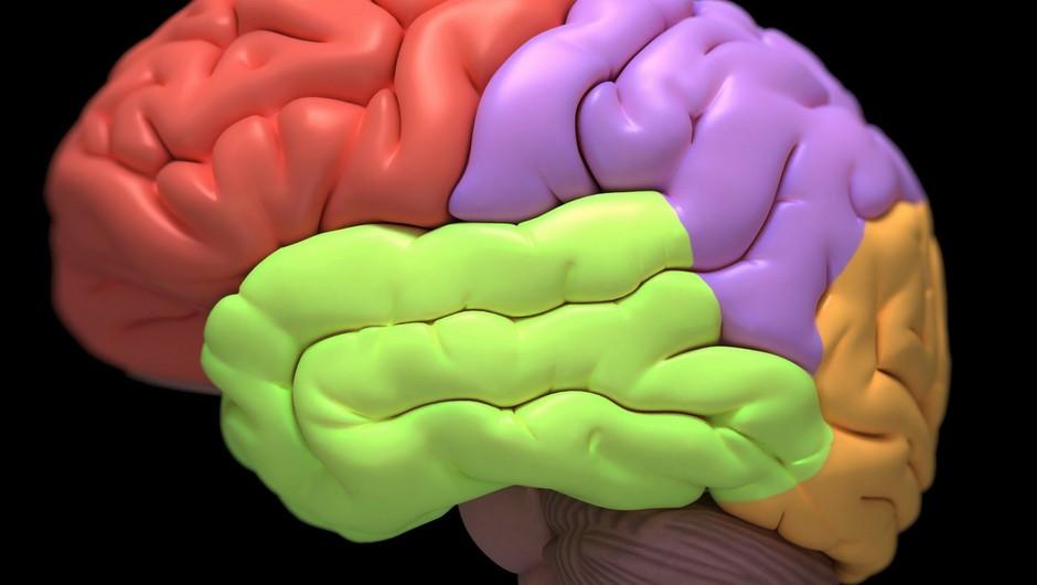 Večina možganskih centrov med meditacijo postane povsem neaktivnih.  (foto: Profimedia)