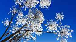 Duhovni pomen cvetja