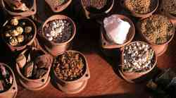 Ajurveda, tradicionalna indijska medicina
