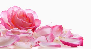 Simbolni pomeni različnih barv vrtnice