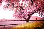cvet-drevo-pomlad