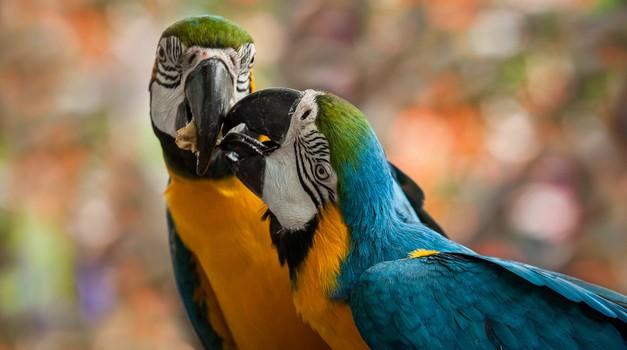 Osho: Izpišite se iz kluba strtih src (foto: Shutterstock)
