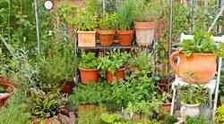 Koristni nasveti za domače vrtnarjenje