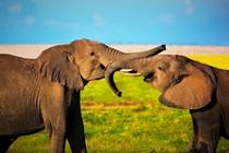 sloni-sreca
