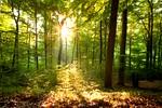 svetloba-sonce-gozd