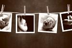 nosecnost-rojstvo