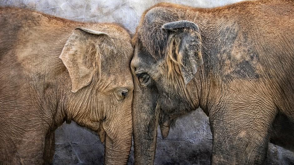 Izstopite iz kluba strtih src! Kar uničuje svobodo, ni ljubezen. (foto: Shutterstock)