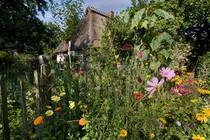 vrt-hisa-roze