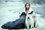 zima-snezna-kraljica-psi-samojedi