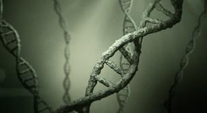 Se travme prenašajo preko DNK zapisa?