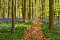 narava-pomlad-gozd