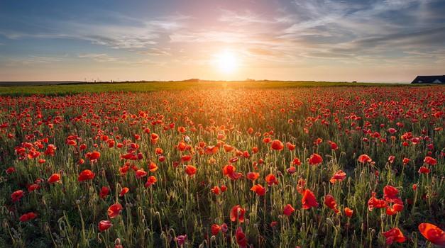 """Življenje po smrti: """"Nebesa so stanje zavesti in ne kraj."""" (foto: profimedia)"""