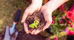 Zakaj bi nujno morali imeti svoj vrt?