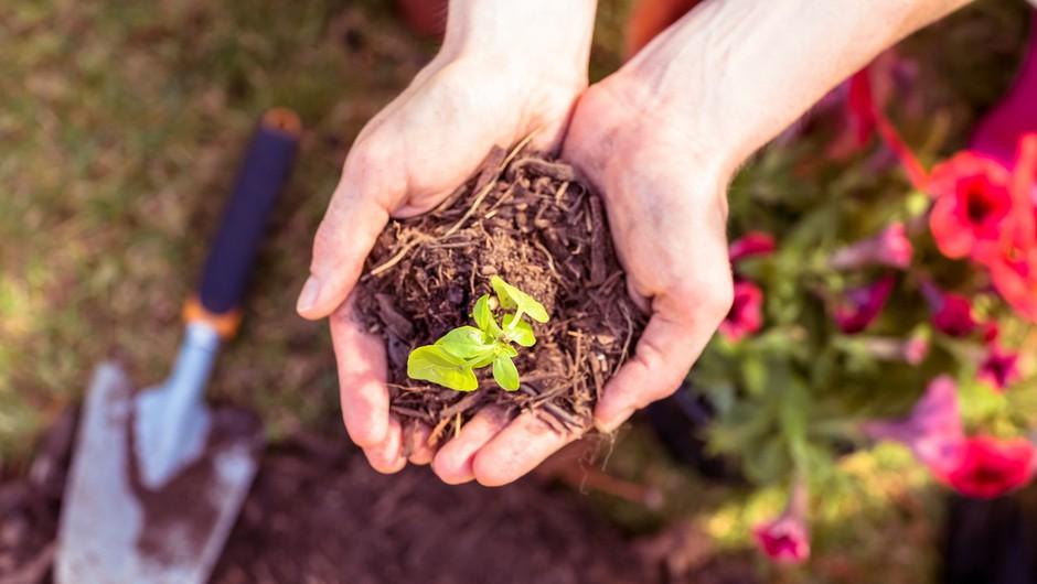 Zakaj bi nujno morali imeti svoj vrt? (foto: profimedia)