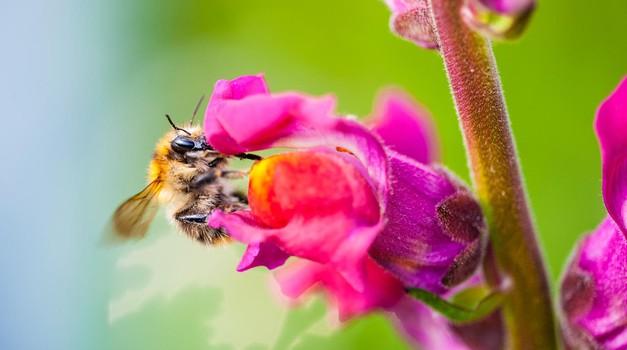 Moč čebeljega strupa pri pomlajevanju (foto: profimedia)