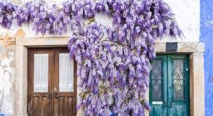Vijolična barva lahko vašemu domu prinese srečo