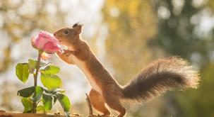 Ne pozabi se ustaviti in poduhati rož
