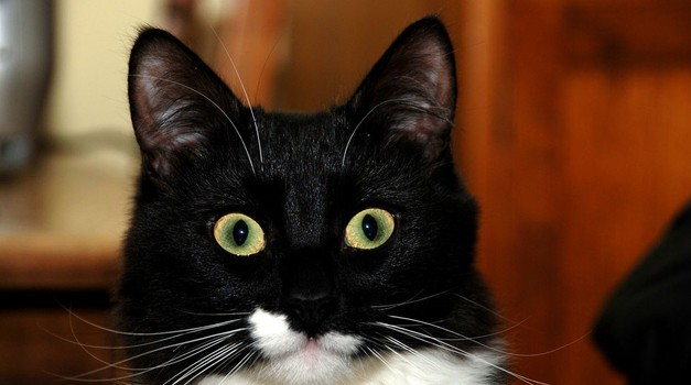 Ali mačke in psi vidijo duhove?