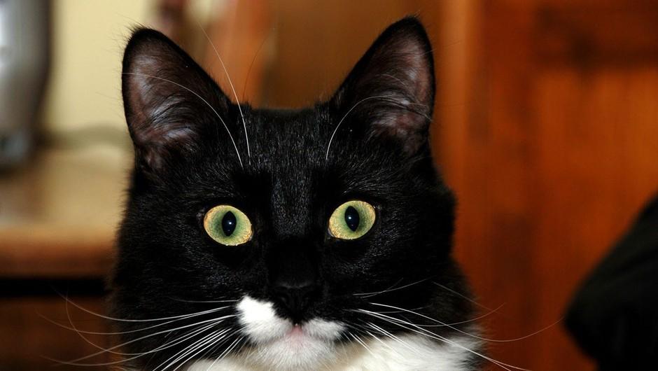 Ali mačke in psi vidijo duhove? (foto: profimedia)