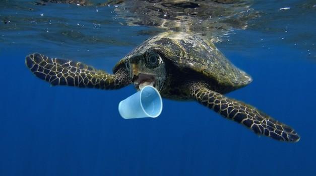 8 plastičnih stvari, ki se jim lahko takoj odpovemo (foto: Profimedia)