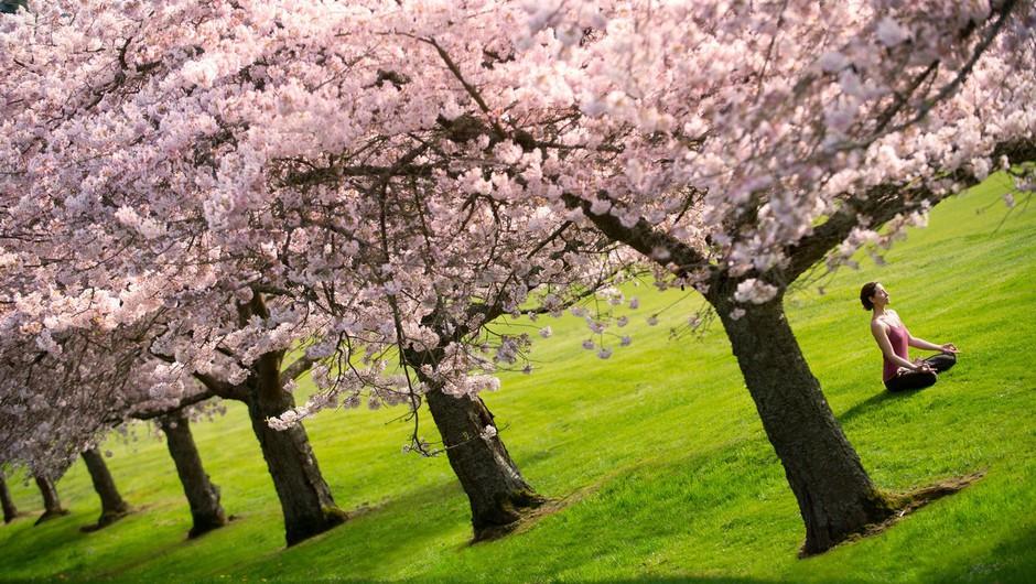 3 pomladni joga dogodki (foto: parinama)