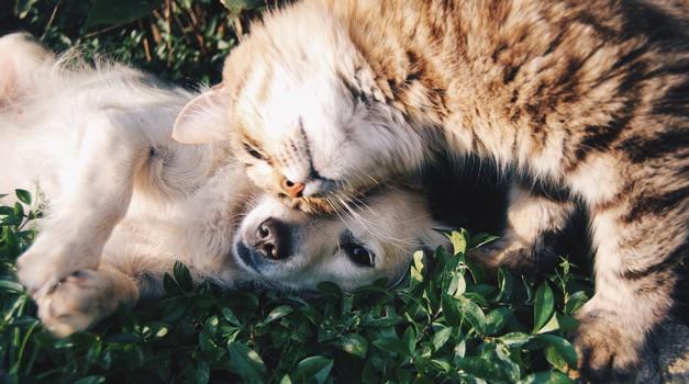 Kakšna je razlika med ljudmi, ki imajo raje pse in tistimi, ki imajo raje mačke? (foto: unsplash)