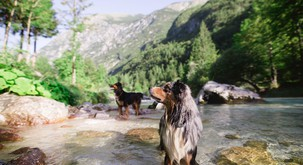 Pasji kamp ob reki Soči