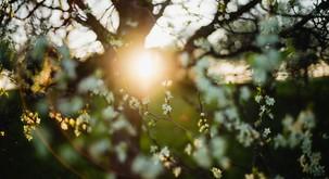 Energije poletnega solsticija so naklonjene manifestaciji