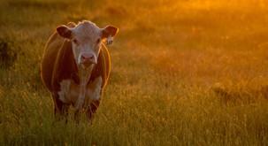 Sporočilo za današnji dan: Živali imajo dušo