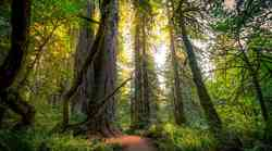 Ali veš, da drevesa govorijo?