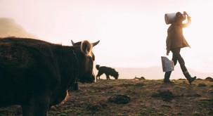 8 razlogov, zakaj ne pijemo kravjega mleka
