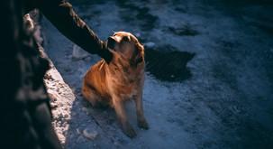 Znanstveno dokazano: psi so naravni detektorji laži