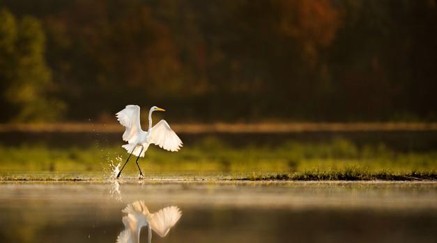 Dinamična ali dialektična meditacija - skok v radost (foto: Unsplash.com)