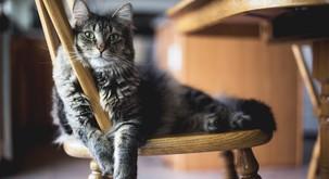 Znanstveniki dokazali, da imajo mačke vendarle rade ljudi