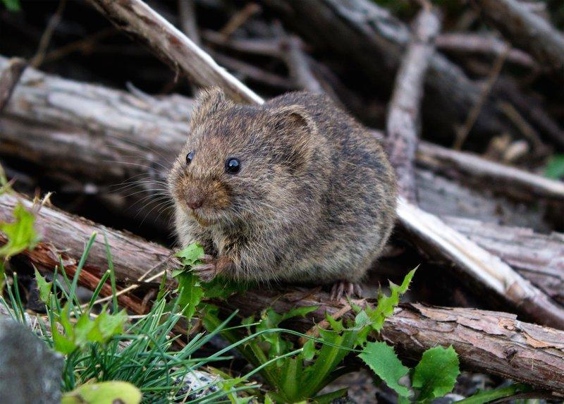Miš nas opozarja na detajle