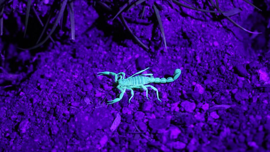 Kaj nam prinaša mlaj v škorpijonu (7. 11.) (foto: unsplash)