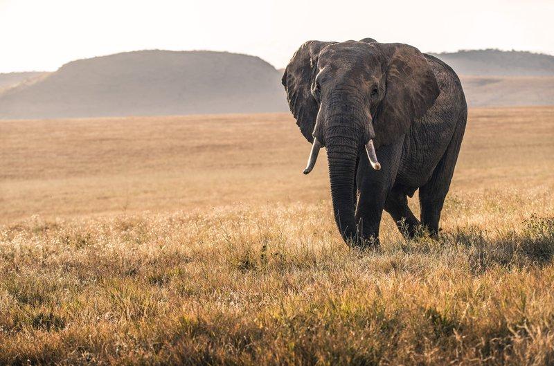 Slon ponazarja prijaznost in modrost