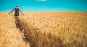 Smo alergični na gluten ali na pesticide in herbicide?